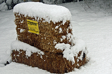 Snow on the bales